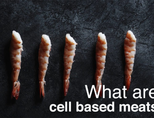 What are cell based meats?