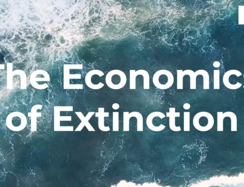 The Economics of Extinction: Phytoplankton