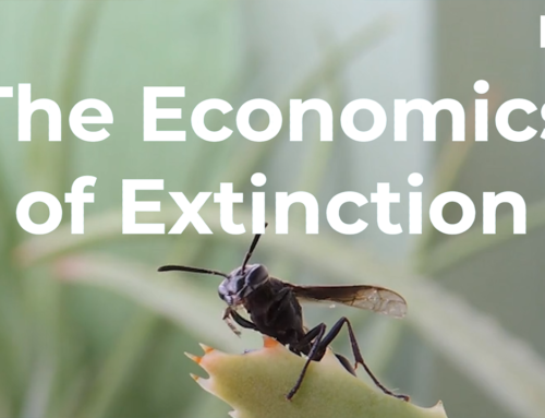 The Economics of Extinction: Insects